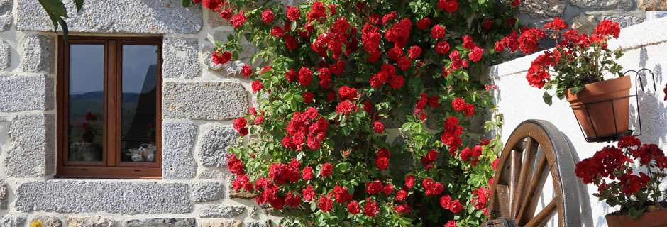 Szőregi Rózsaünnep - Szállás